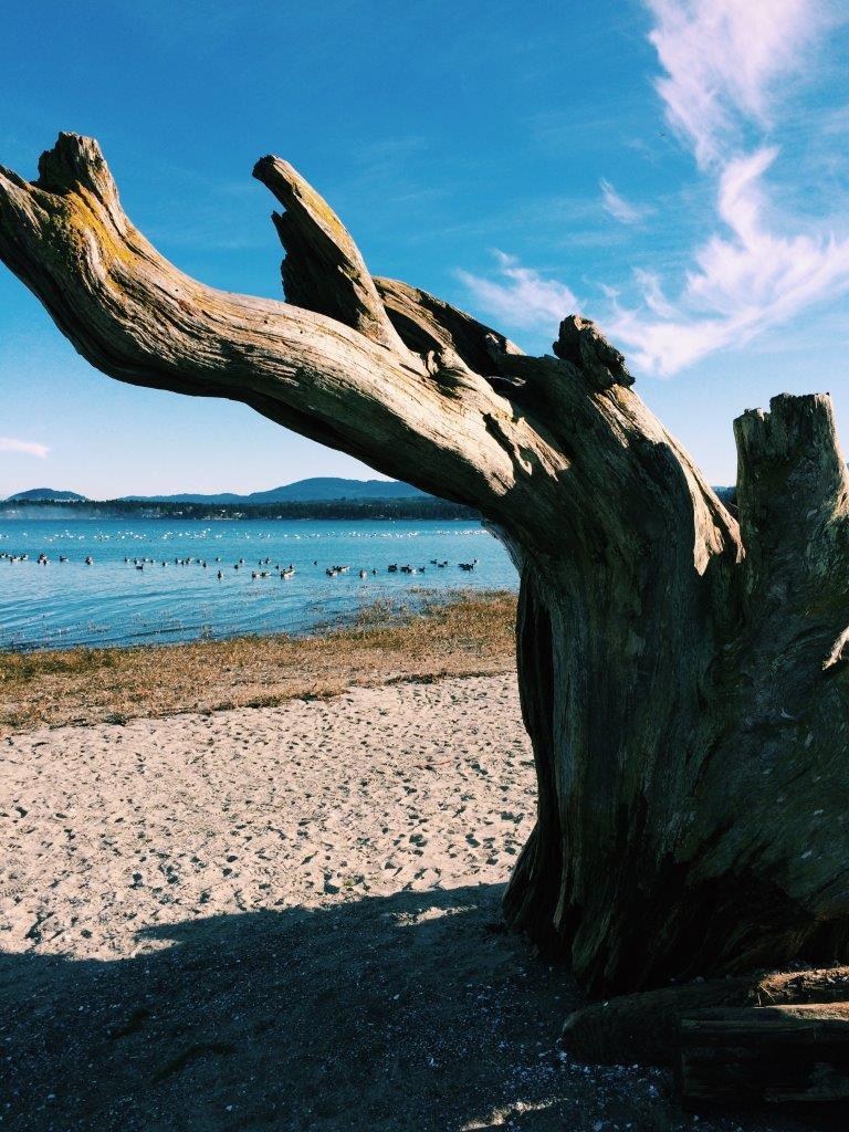 jana meerman rathtrevor beach park (2)