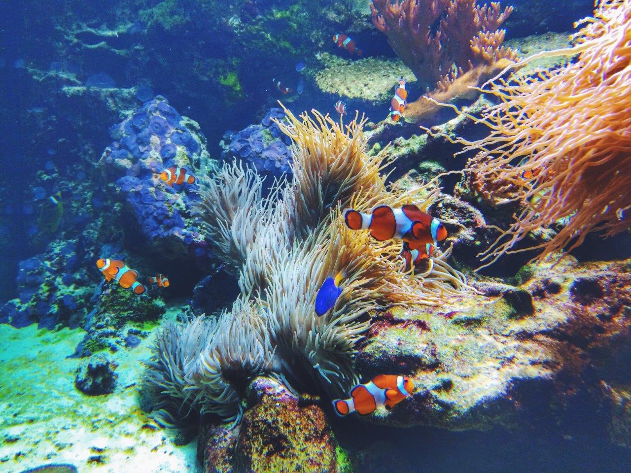 jana meerman vancouver aquarium