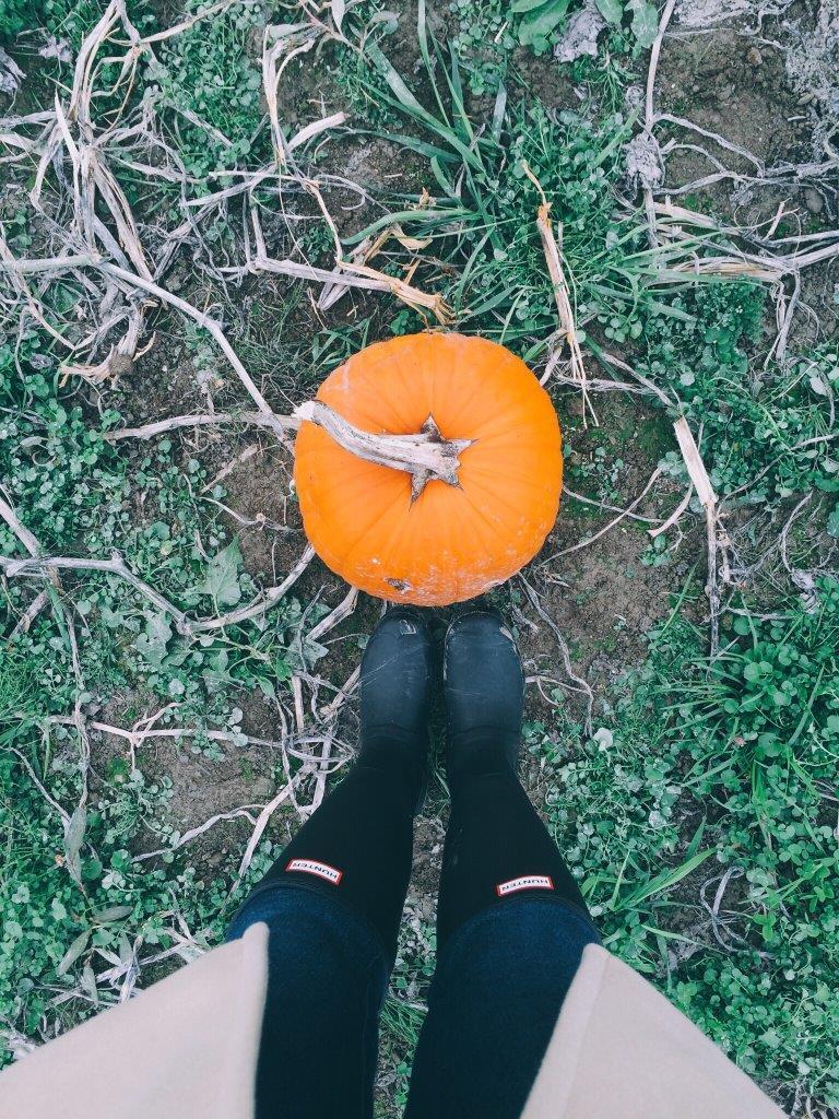 jana meerman pumpkin patch