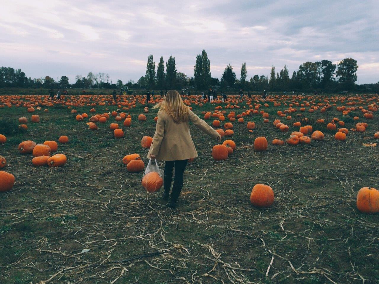 jana meerman pumpkin patch