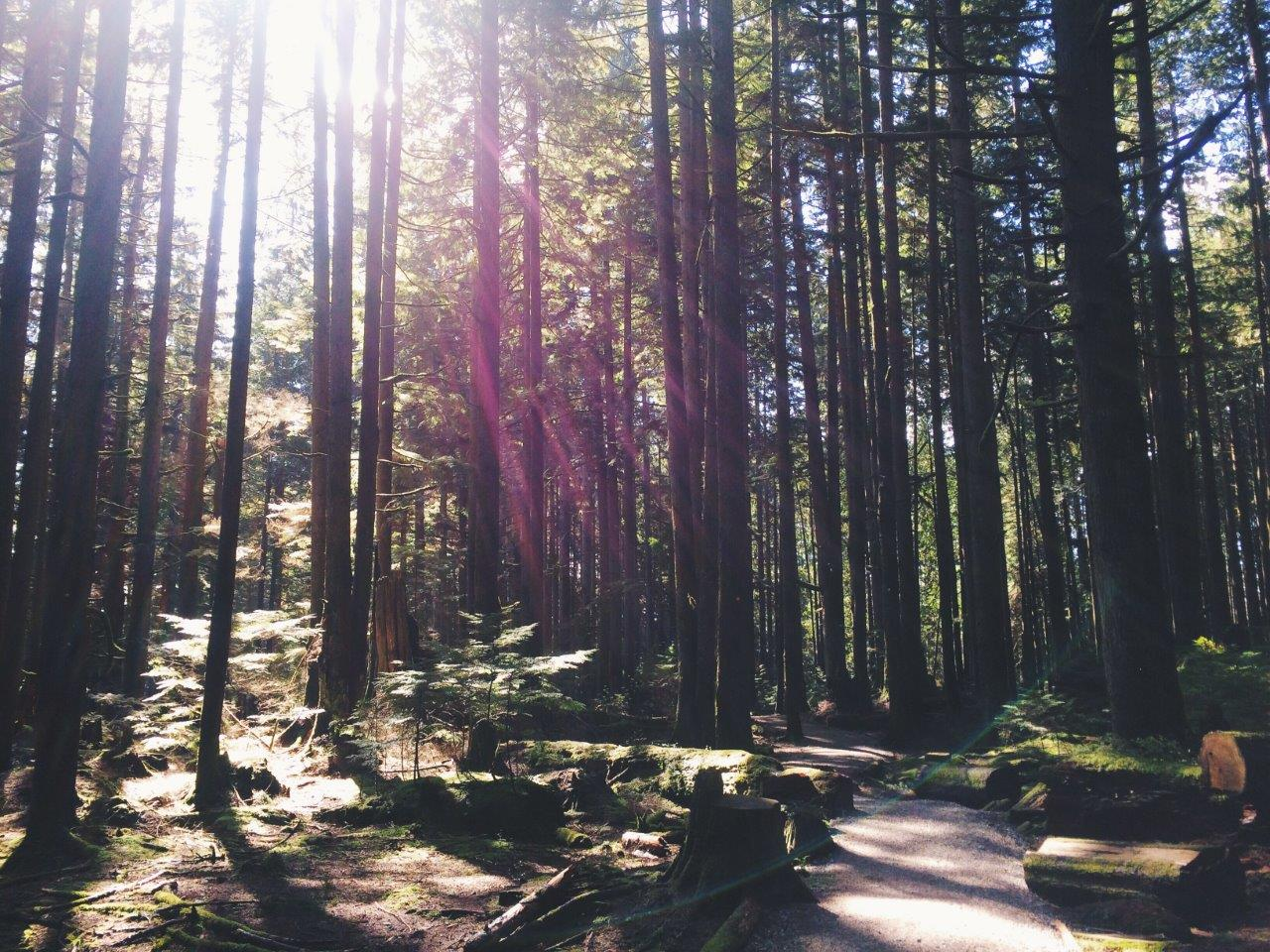 Baden Powell Trail: Lynn Valley to Grouse Mountain Hike