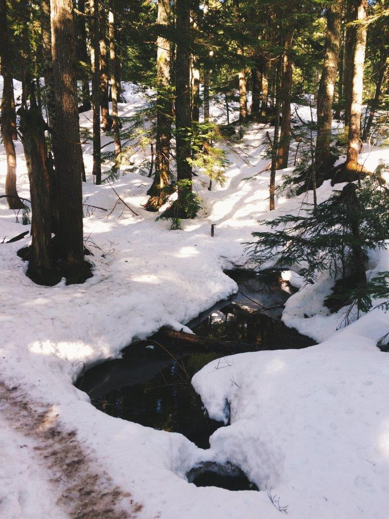 jana meerman bcmc trail hike (13)
