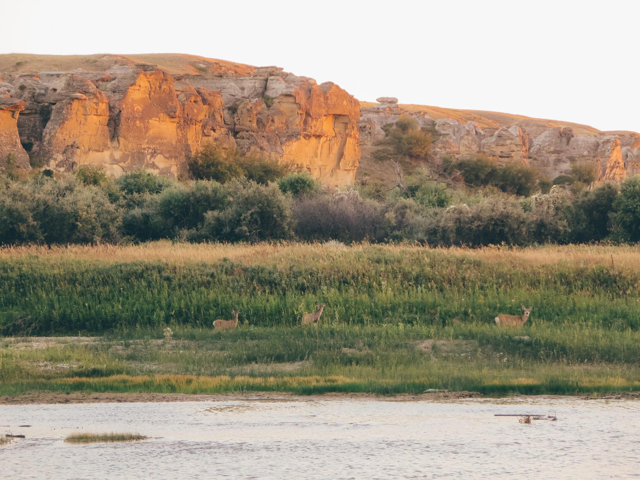 jana meerman writing-on-stone provincial park-4