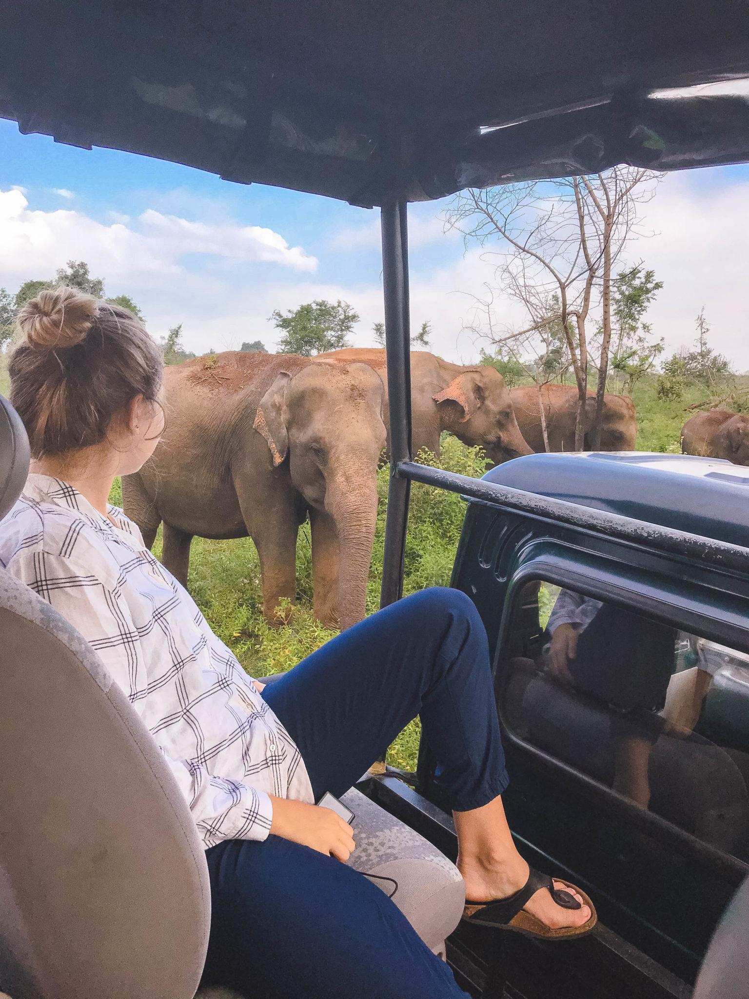 jana meerman uda walawe sri lanka safari-2