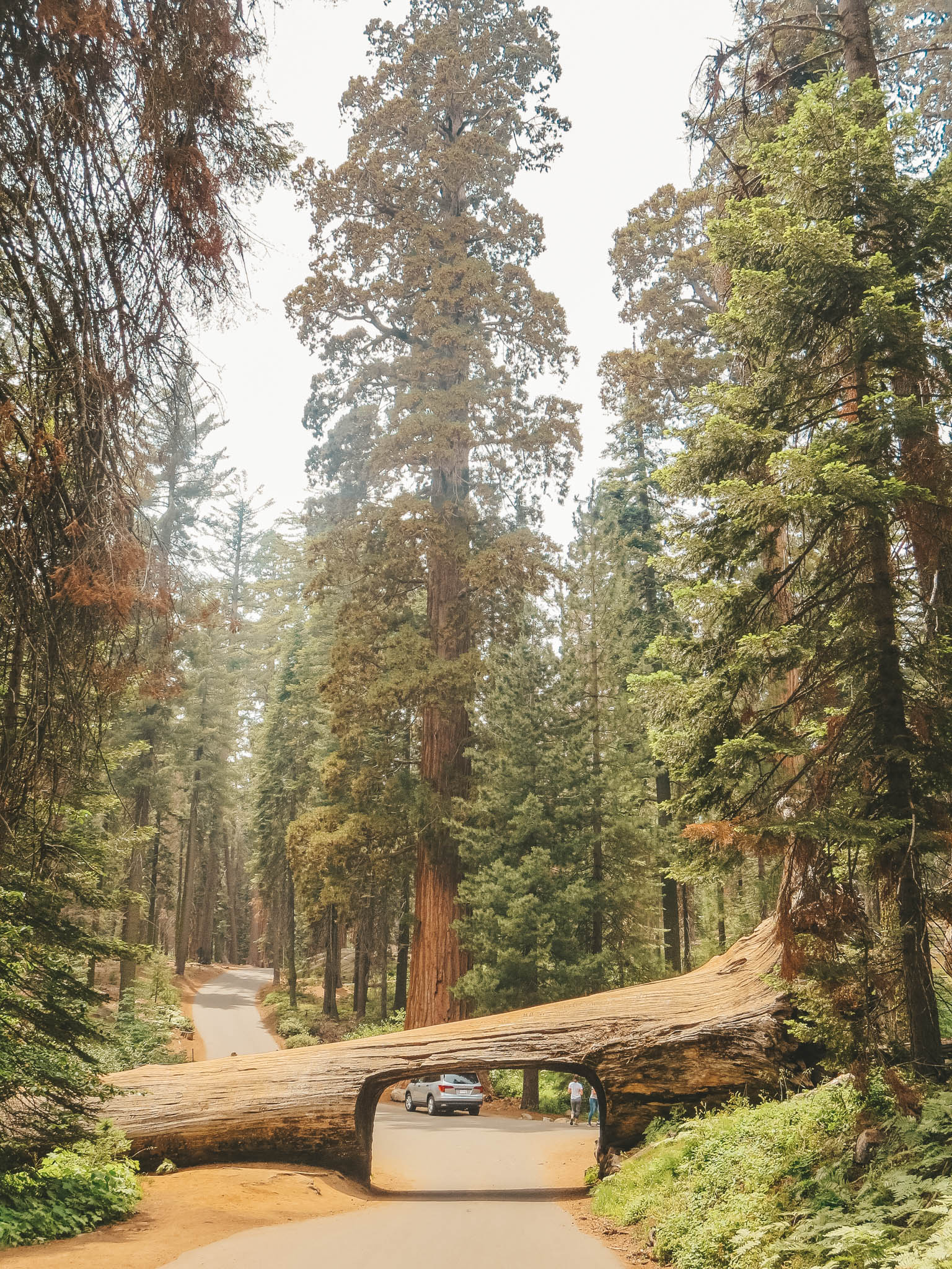jana meerman sequoia kings canyon national parks-16