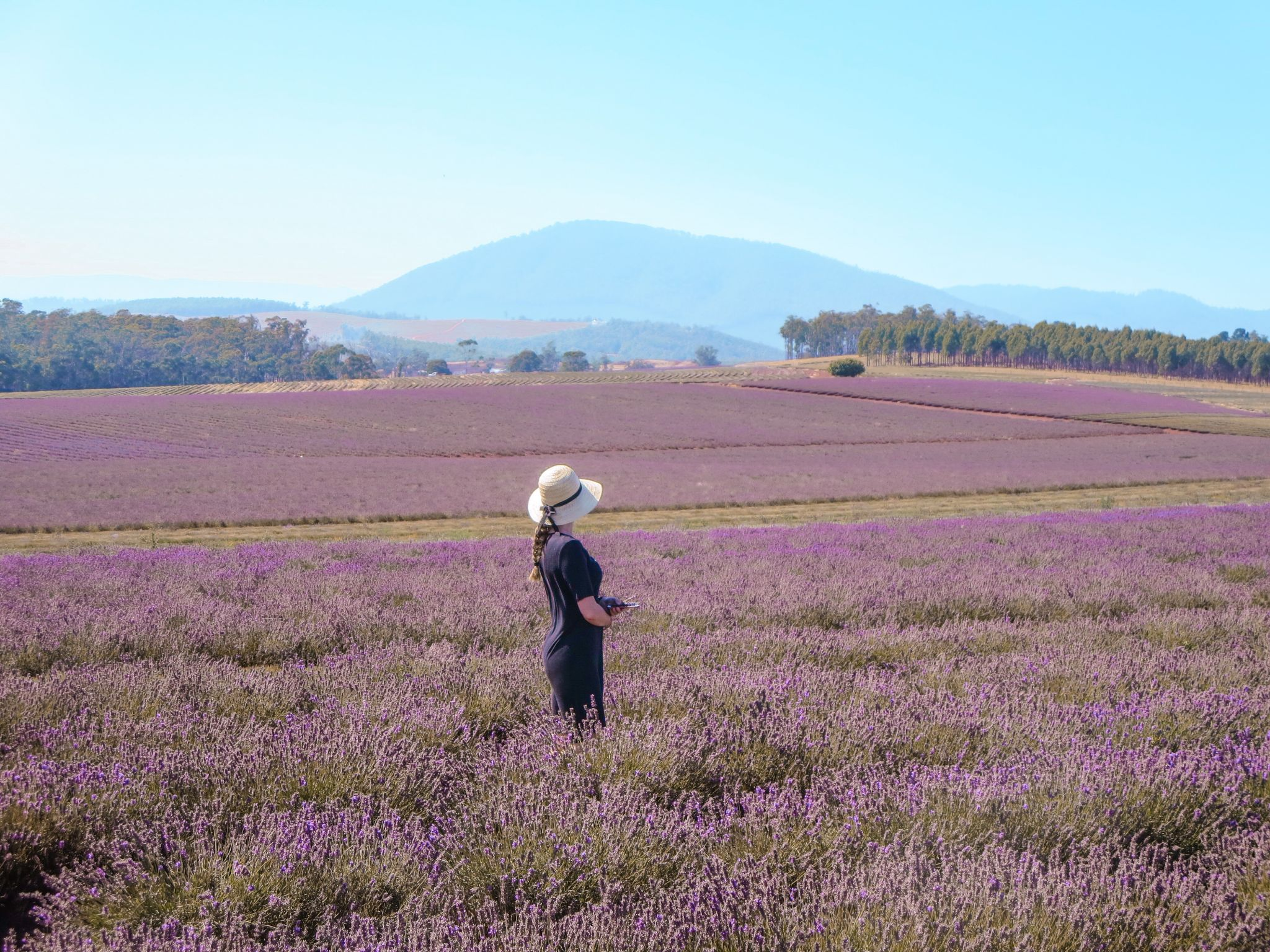 jana meerman bridestowe lavender farm launceston (9)
