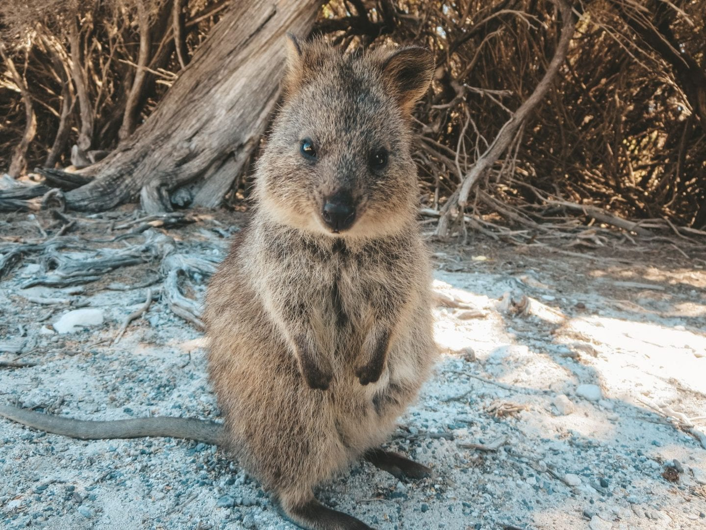 A Day on Rottnest Island