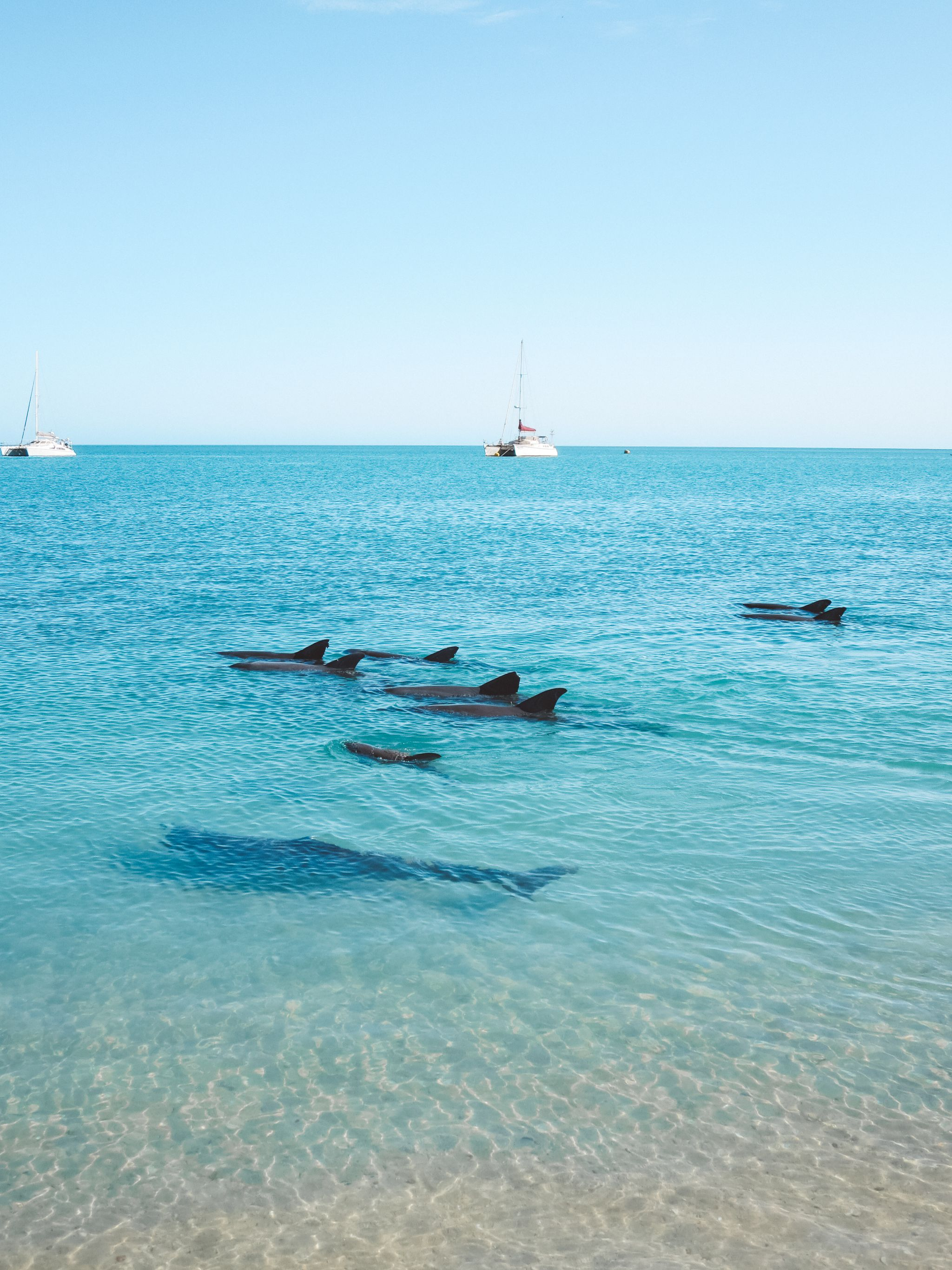 jana meerman monkey mia dolphins (3)