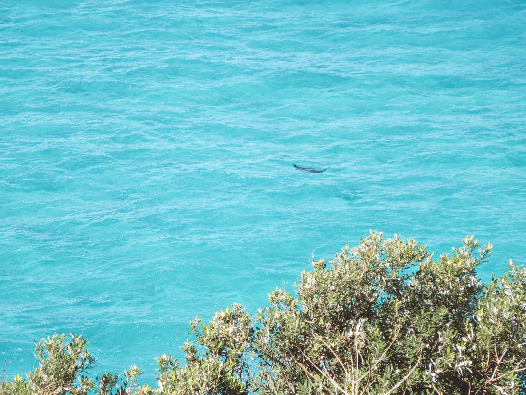 jana meerman stradbroke island brisbane (3)