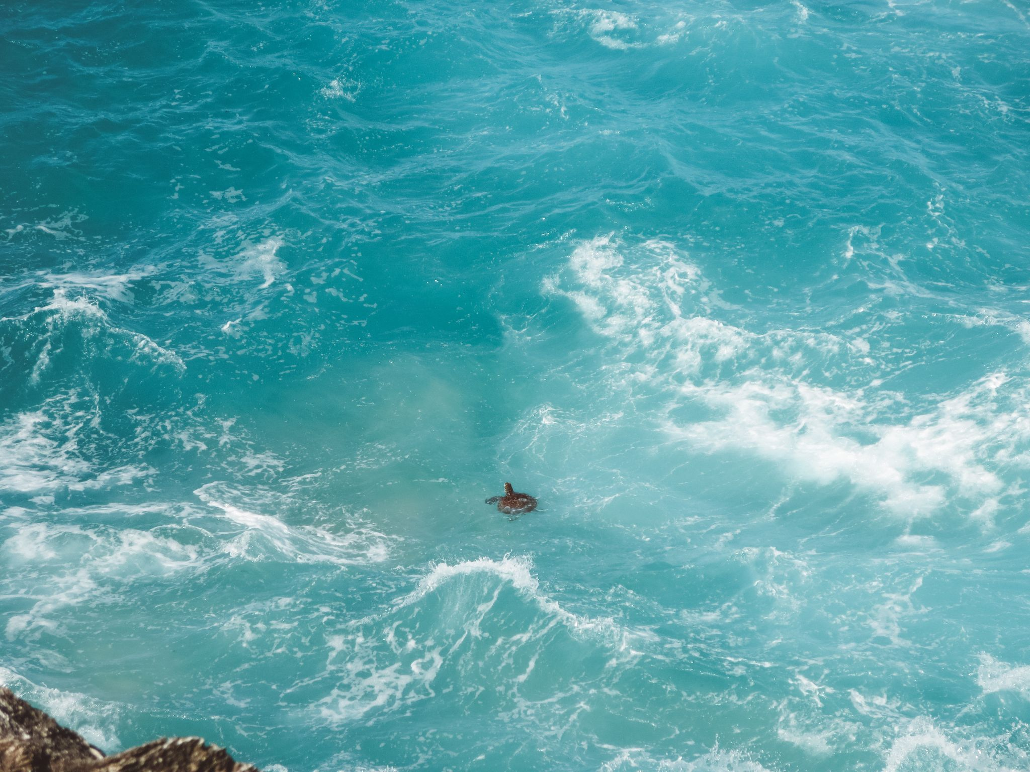 jana meerman stradbroke island brisbane (7)
