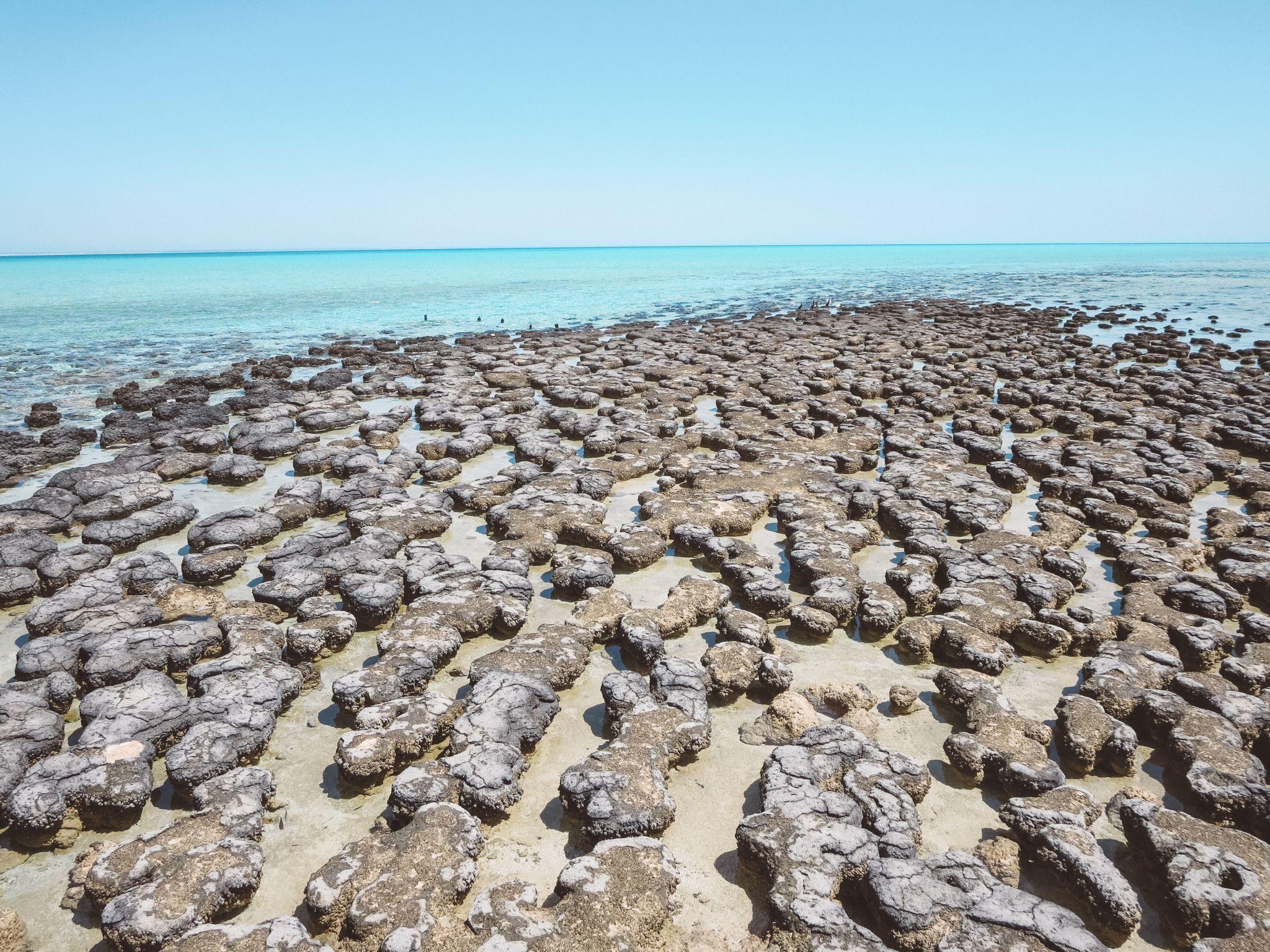 jana meerman stromatolites australia (3)