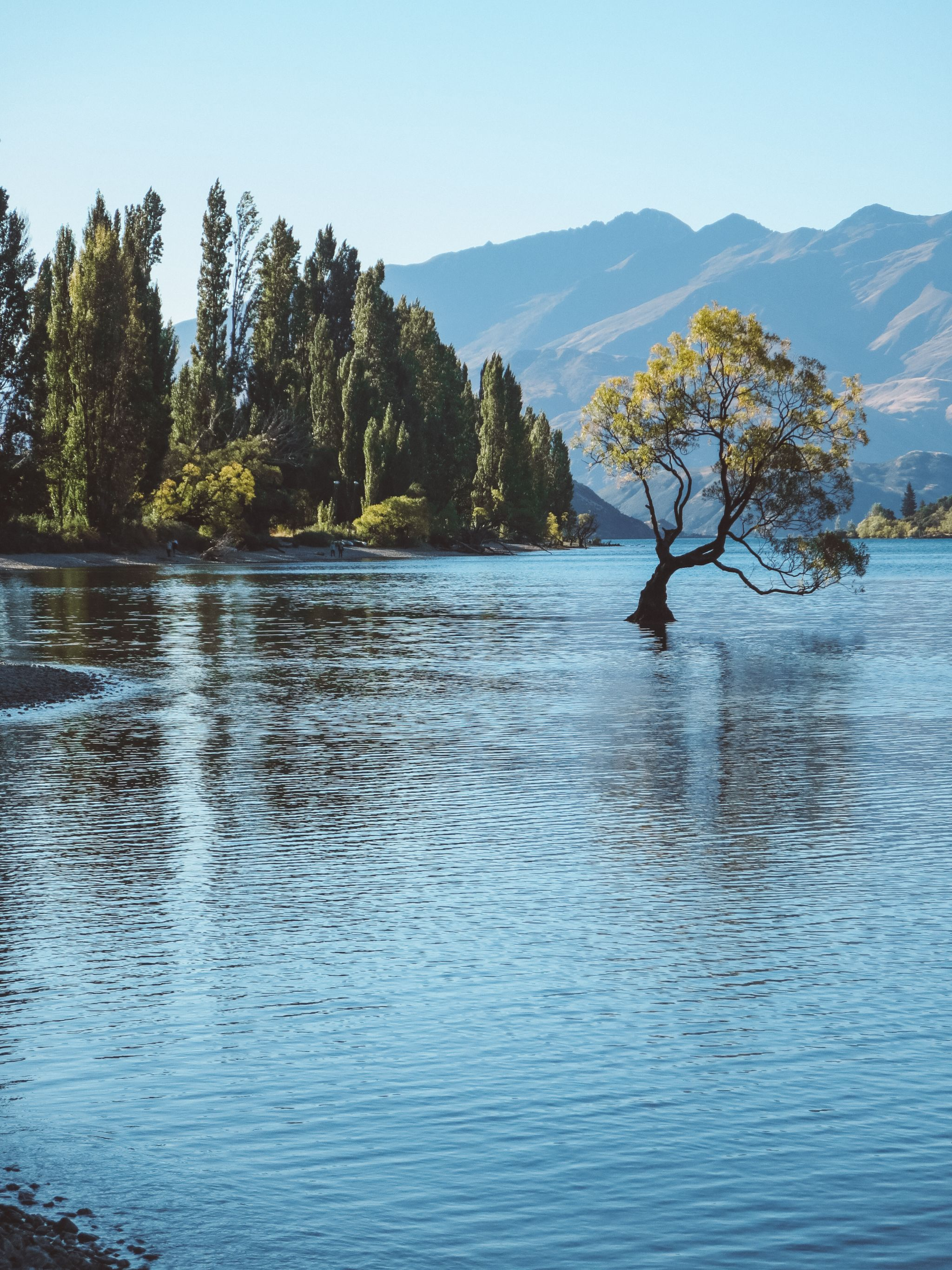 jana meerman lake wanaka that wanaka tree (2)