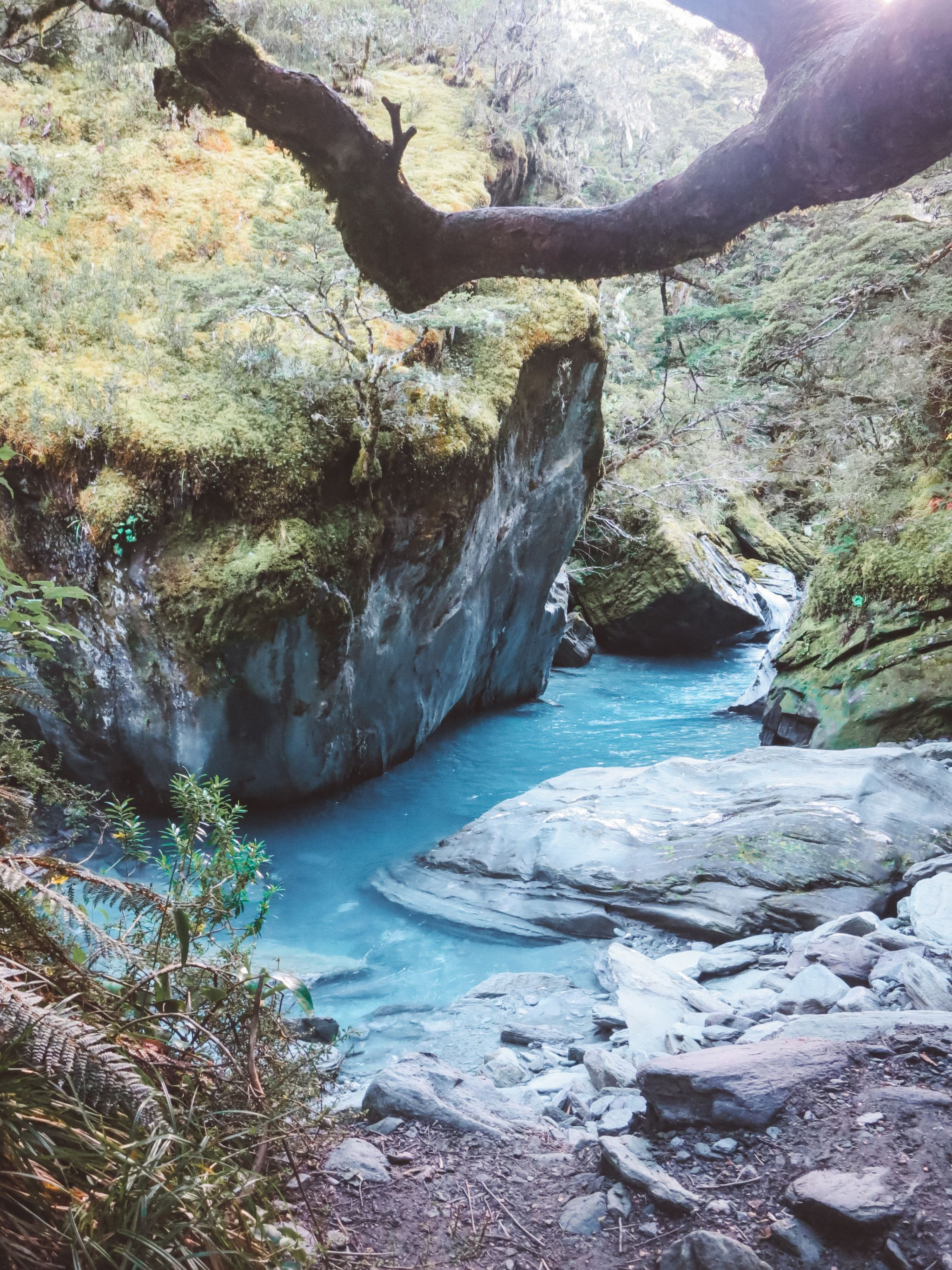 jana meerman rob roy glacier track (6)