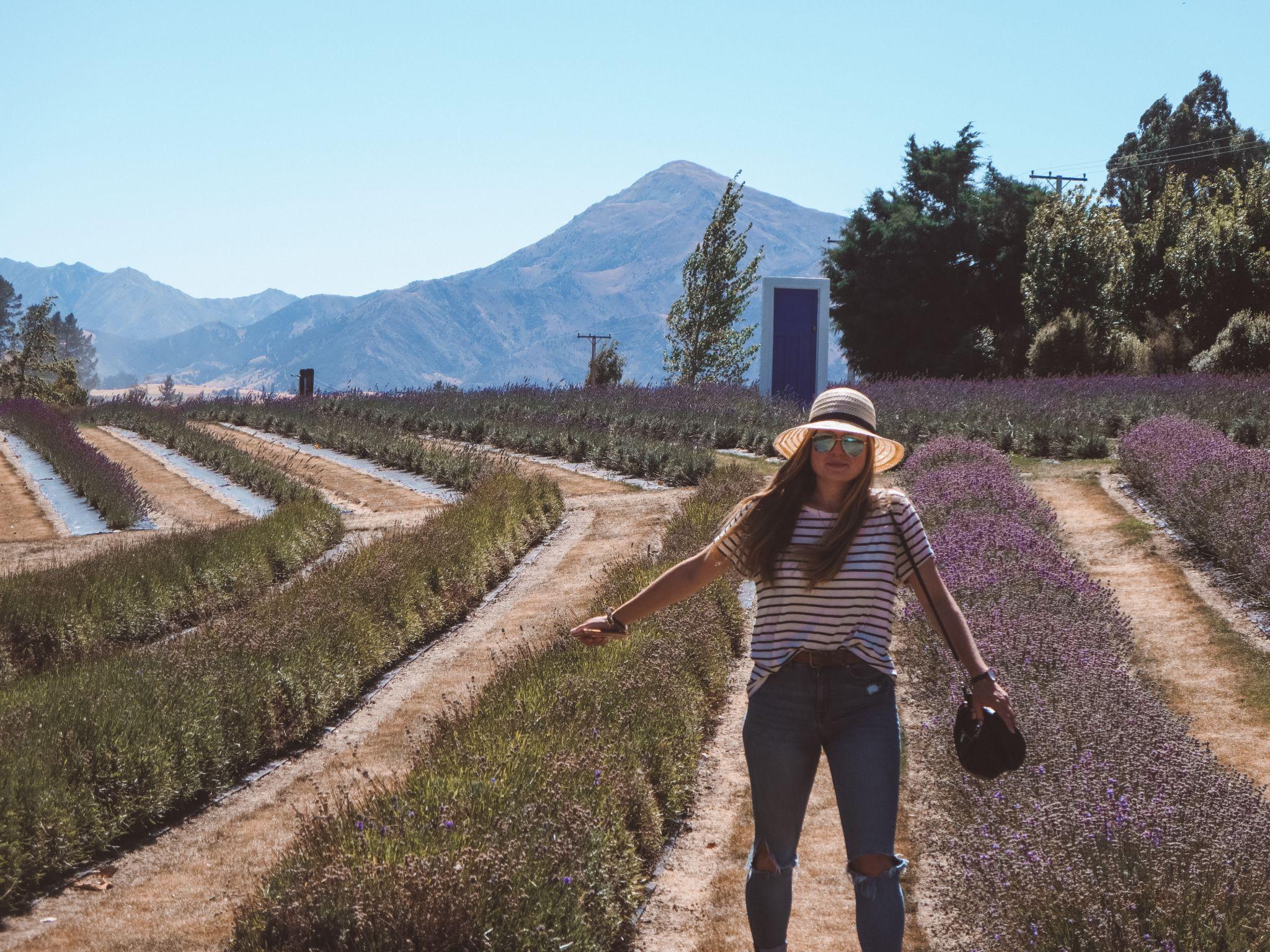 jana meerman wanaka lavender farm (7)