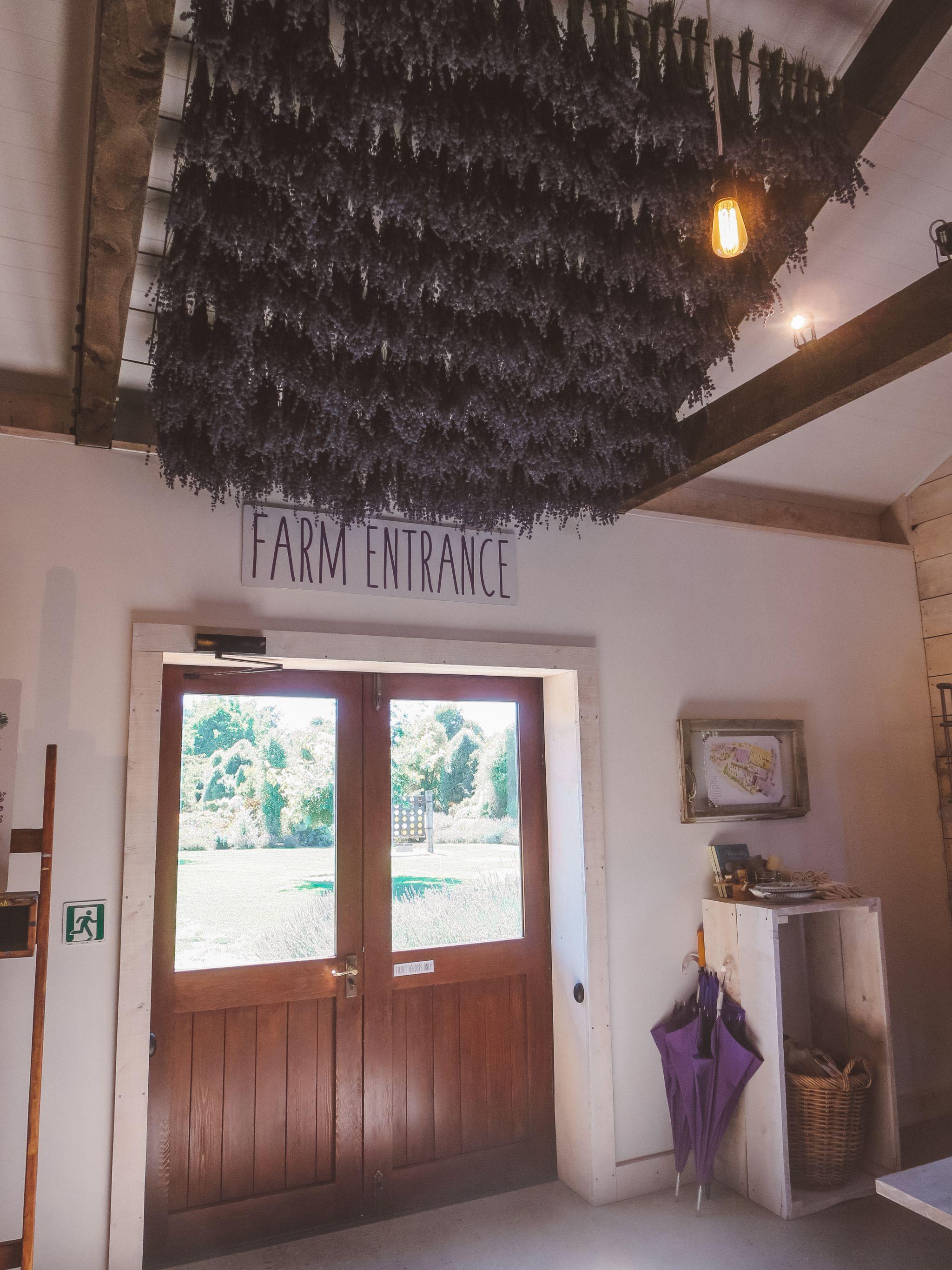 jana meerman wanaka lavender farm (2)