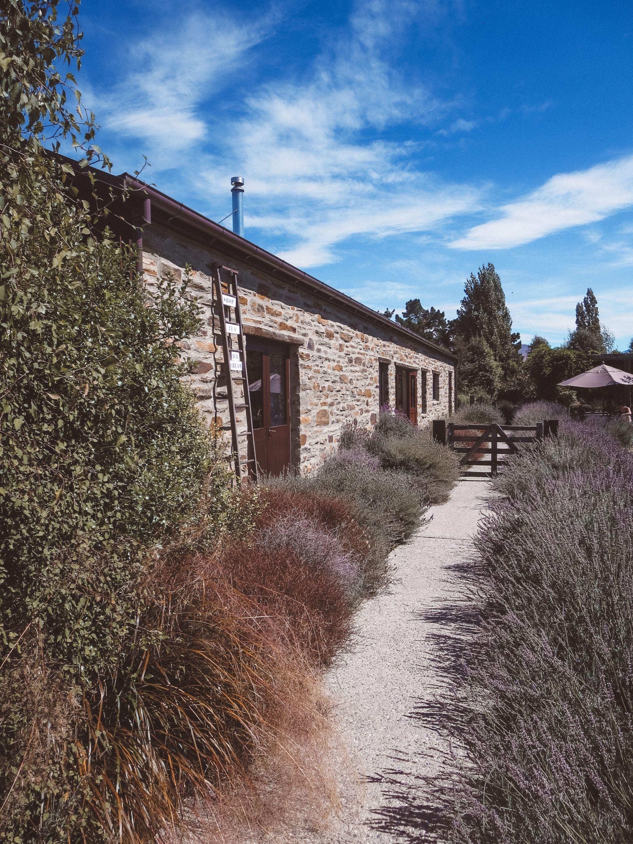 jana meerman wanaka lavender farm (22)