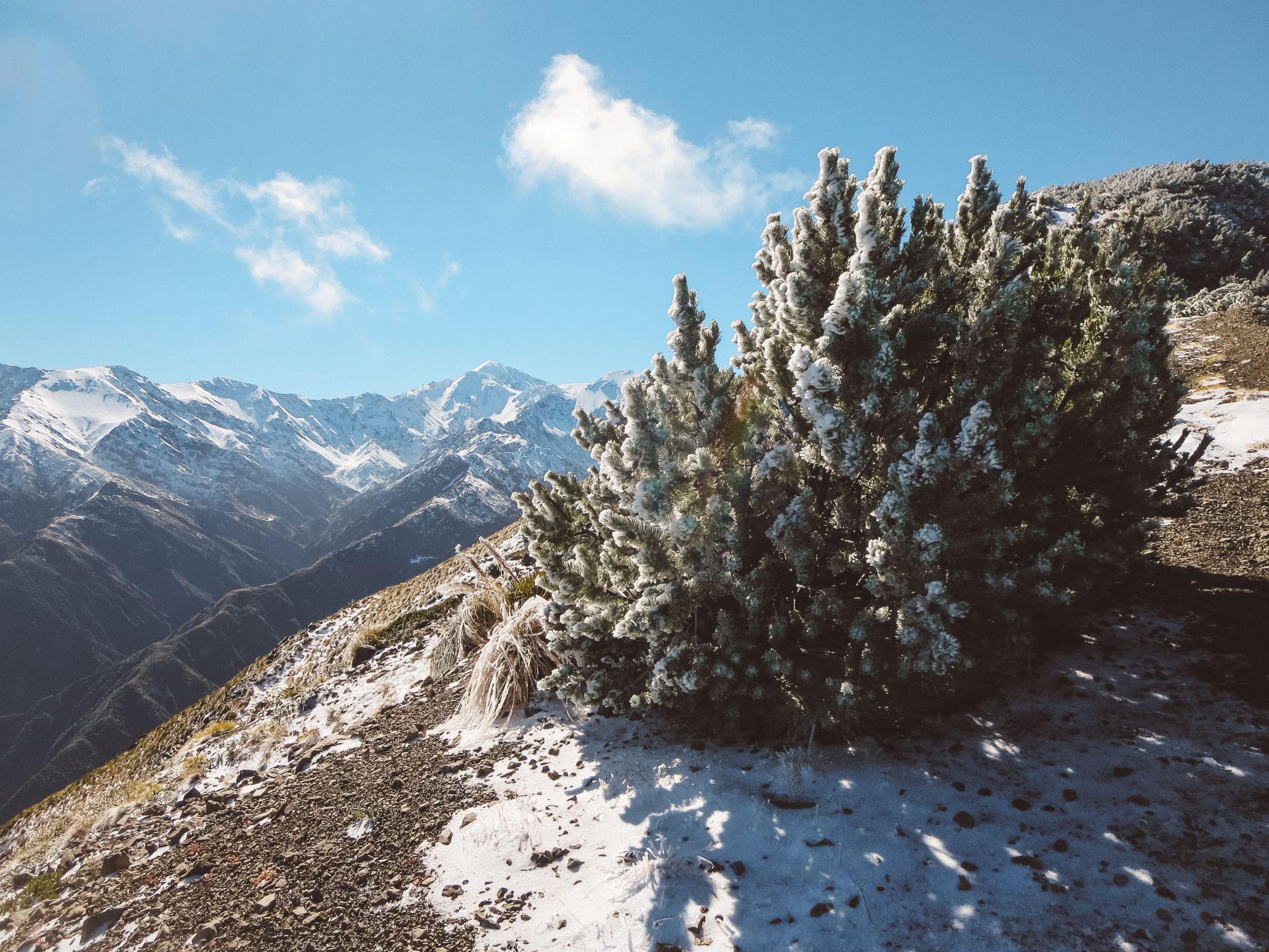 jana meerman mount fyffe hike kaikoura (10)