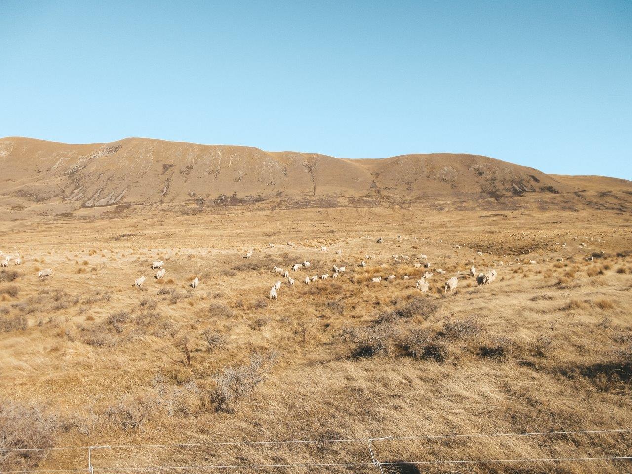 jana meerman mount sunday new zealand 6