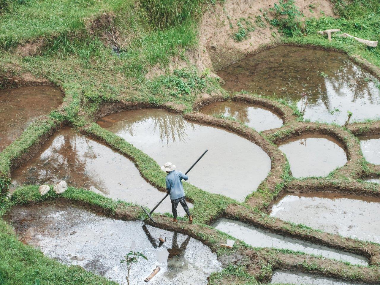 jana meerman tegallalang rice terraces bali 1