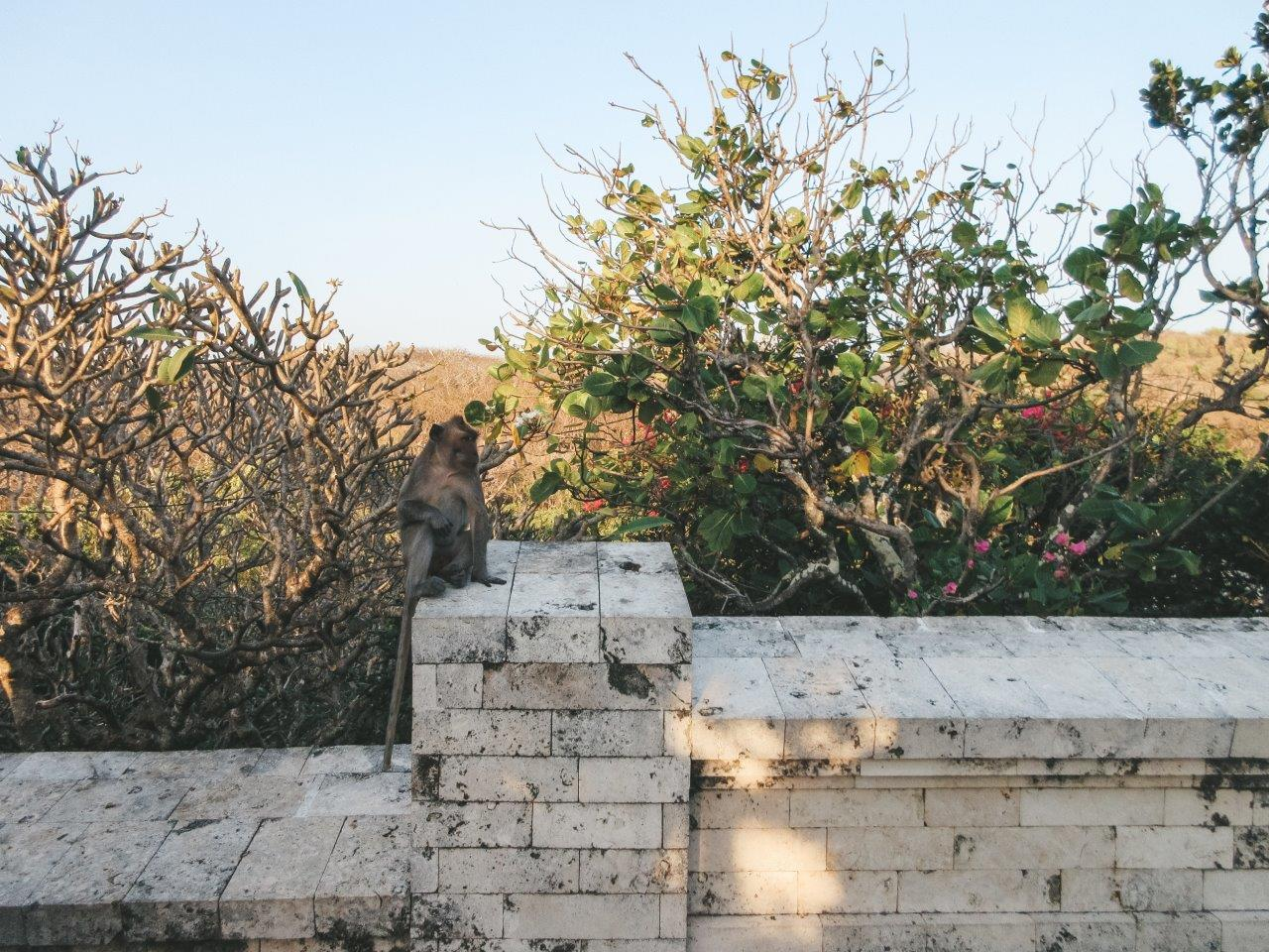 jana meerman uluwatu temple bali 11