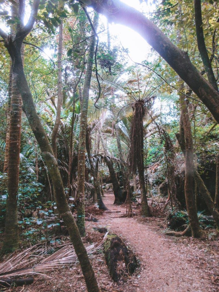 jana meerman grove scenic reserve takaka (1)