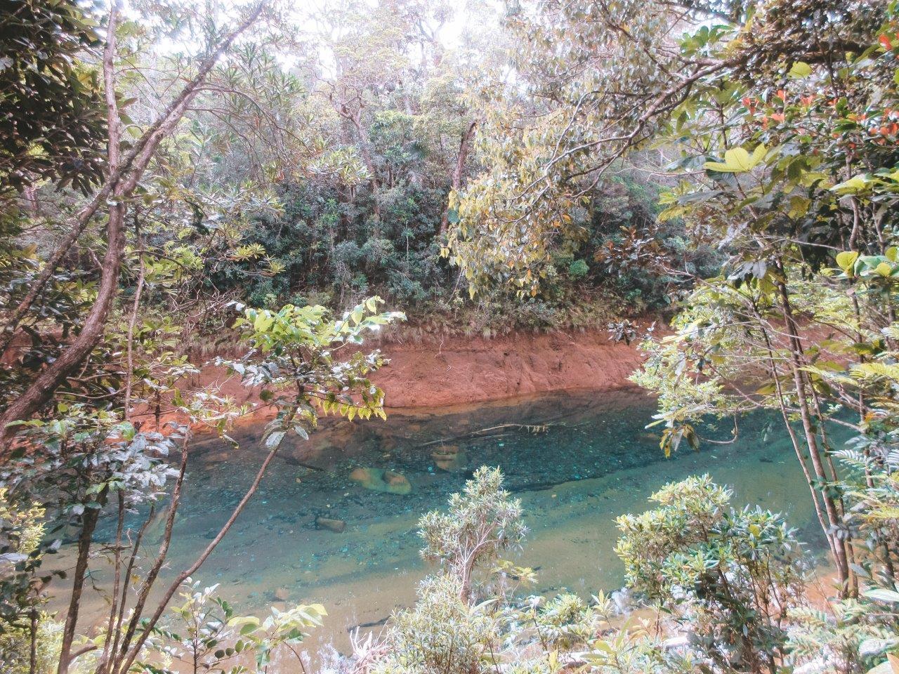jana meerman parc provincial de la riviere bleue new caledonia (3)