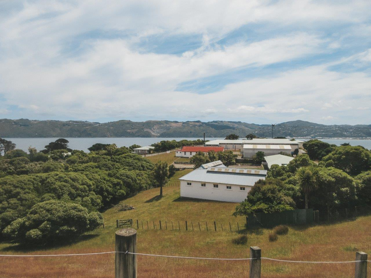 jana meerman matiu somes island wellington (20)