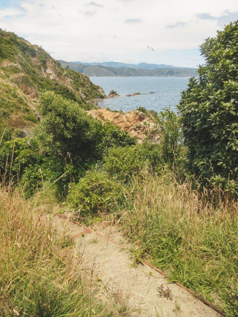 jana meerman matiu somes island wellington (24)
