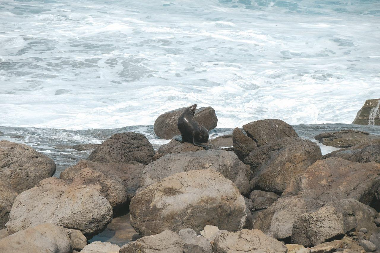jana meerman cape palliser (10)