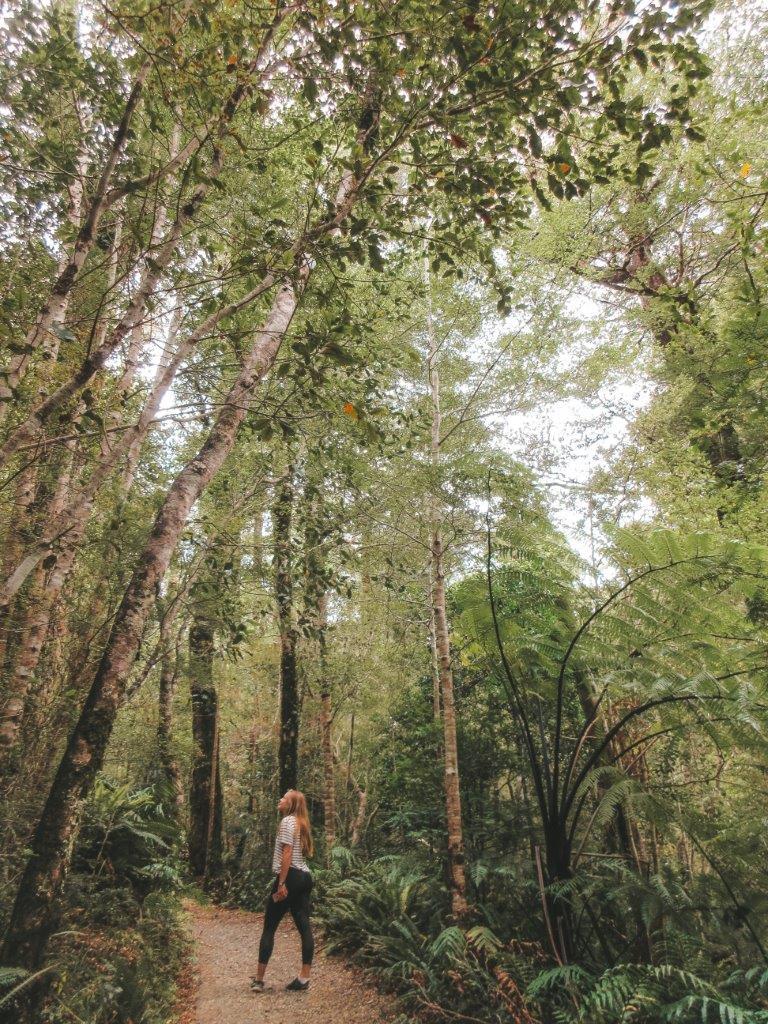 jana meerman tararua forest park (2)