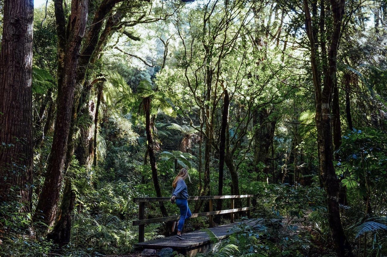 jana meerman kiriwhakapapa loop tararua forest park (12)