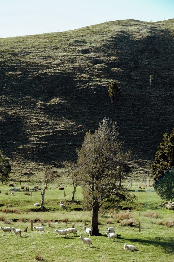 jana meerman kiriwhakapapa loop tararua forest park (2)