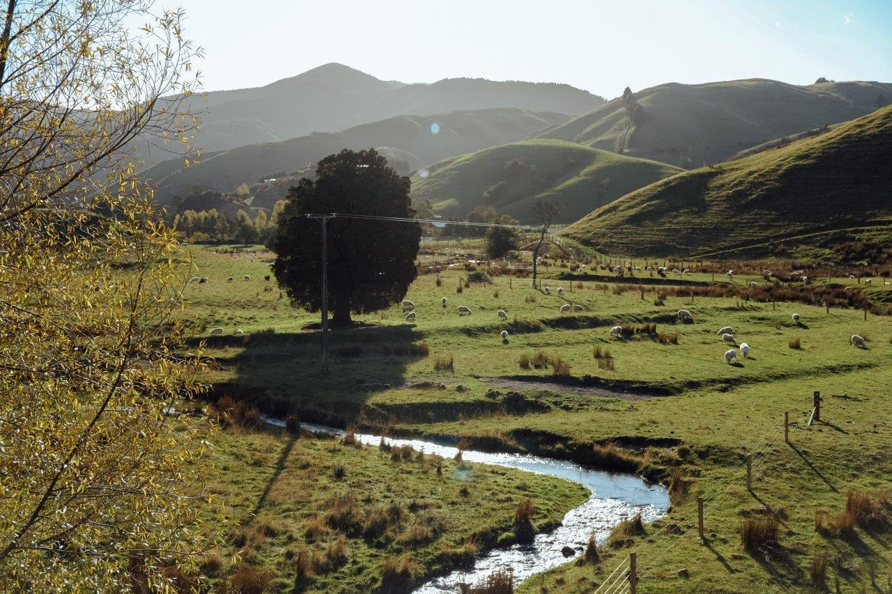 jana meerman kiriwhakapapa loop tararua forest park (1)