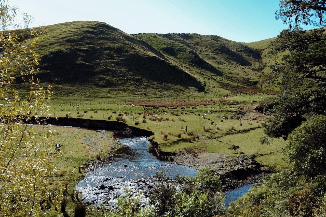 jana meerman kiriwhakapapa loop tararua forest park (4)