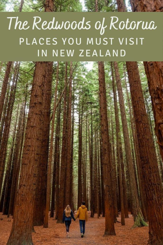 Pinterest - Redwoods (1)