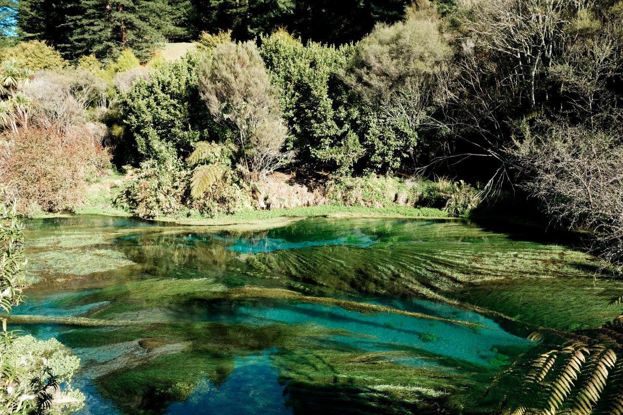 jana meerman blue spring putaruru (1)