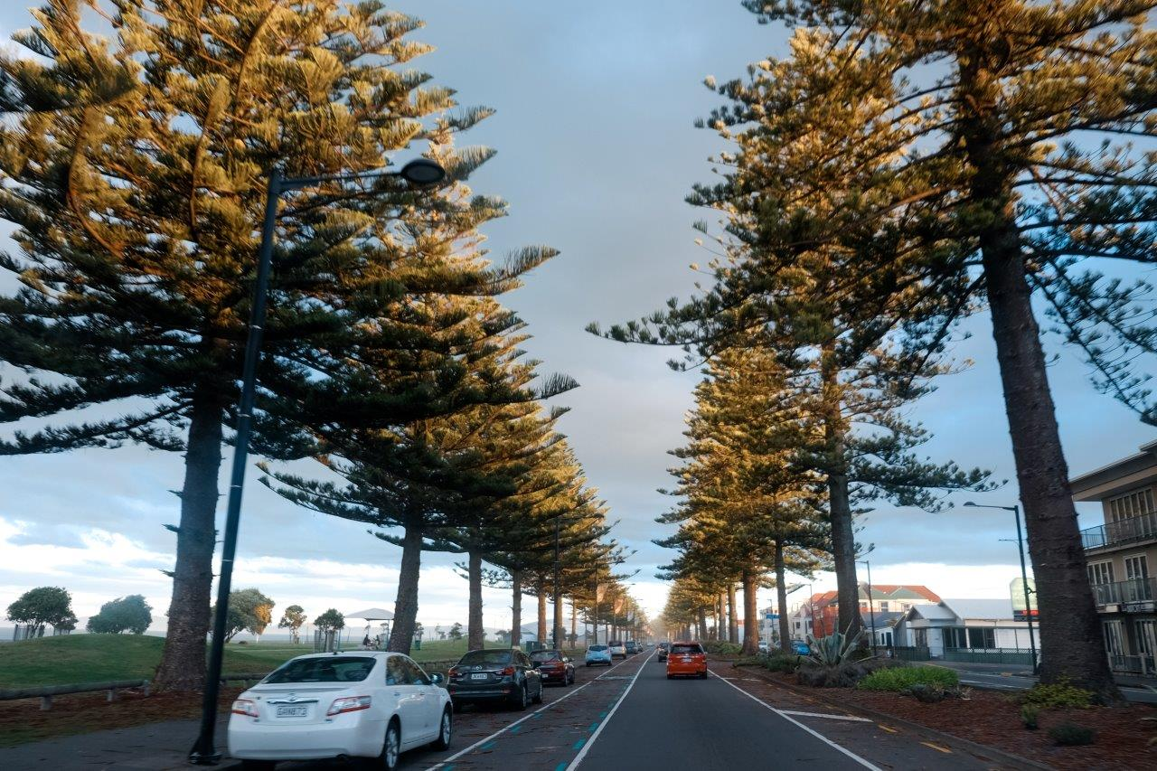 5 Awesome Shops to Visit in Napier