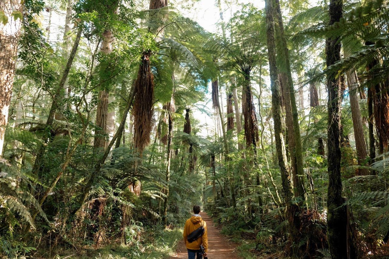Visiting The Redwoods of Rotorua