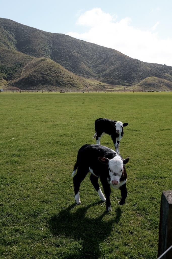 jana meerman farm new zealand (1)