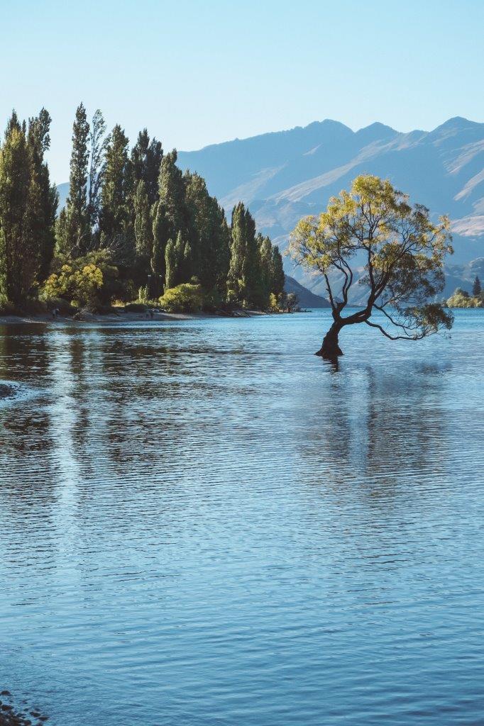 jana meerman lake wanaka that wanaka tree