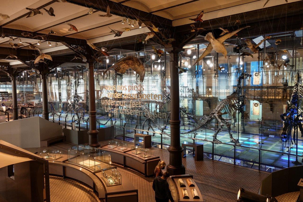 jana meerman museum of natural sciences (1)