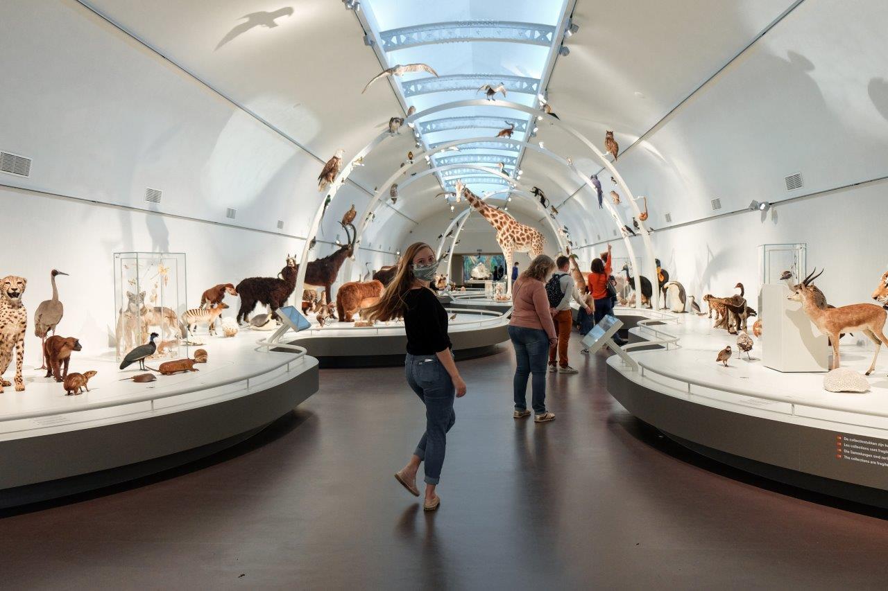 jana meerman museum of natural sciences (2)